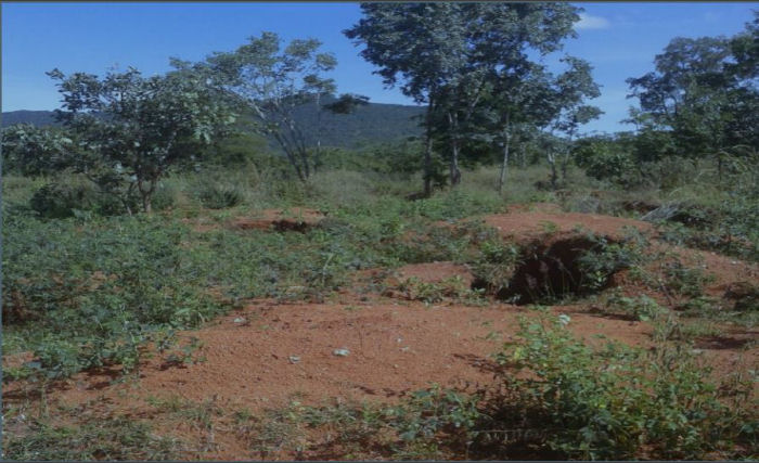 Tanzania Gold Mining Properties For Sale